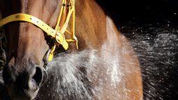 Today's Top 10 Horses -
